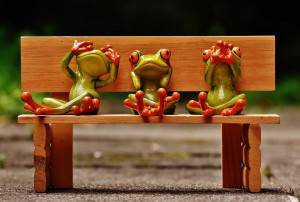 frogs_on_bench